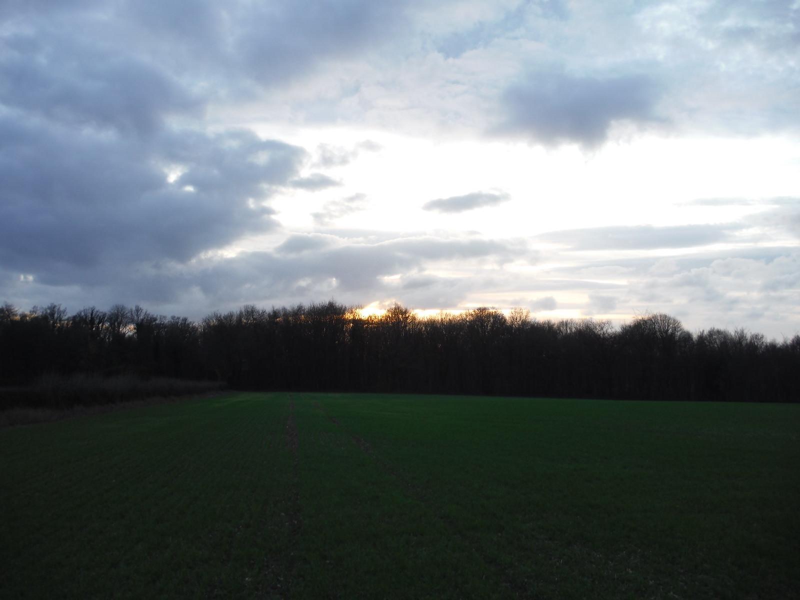 Rook Wood, Great Missenden SWC Walk 140a Wendover to Great Missenden