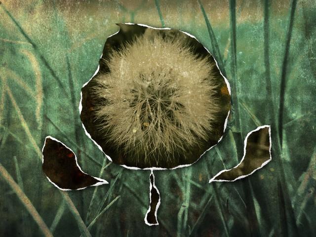 RipPix Flower Rip Demo