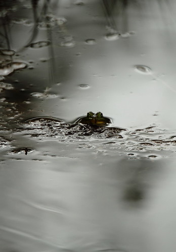 frog konn