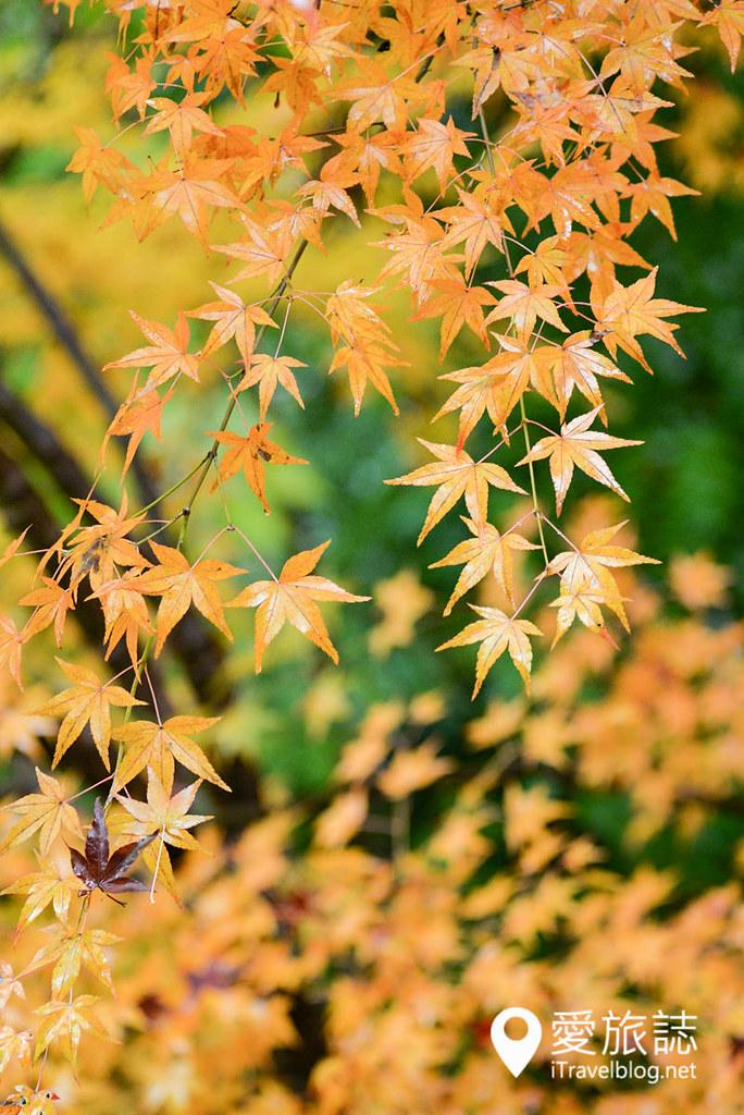 京都赏枫景点 琉璃光院 09