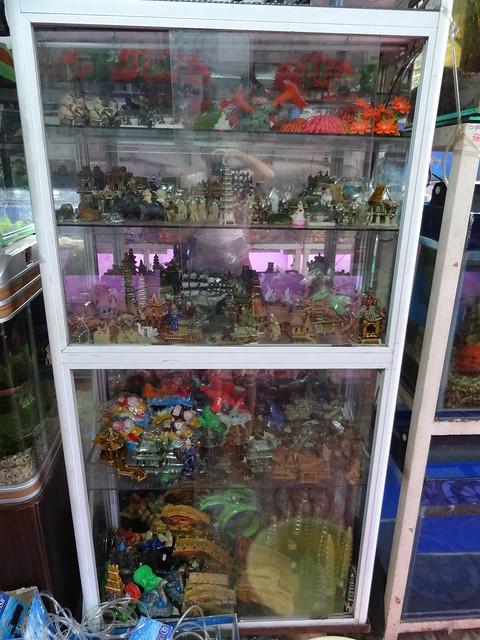 aquarium stores in Danang, Vietnam 20841349641_d30e5b5a43_z