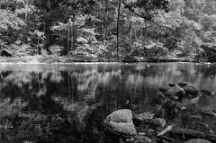 Reflections on the Shepaug