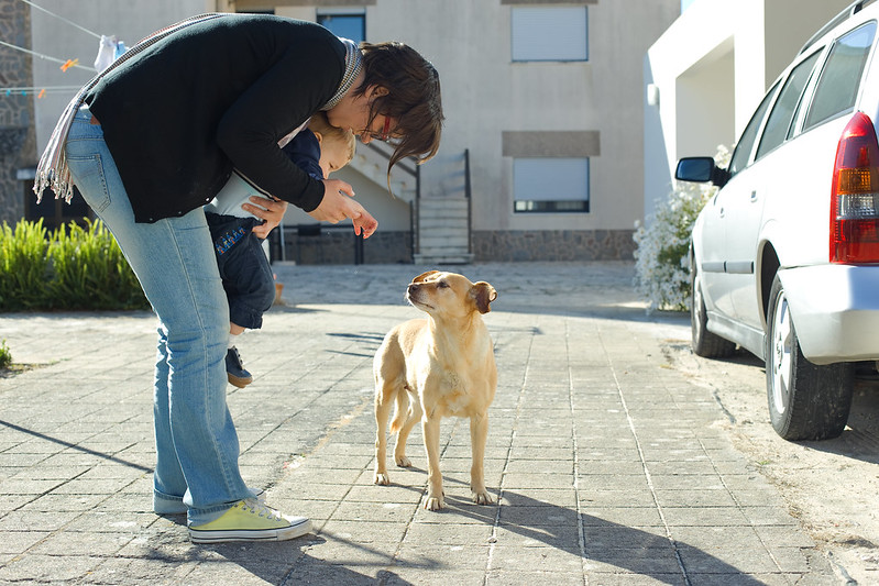 Добродушная собака