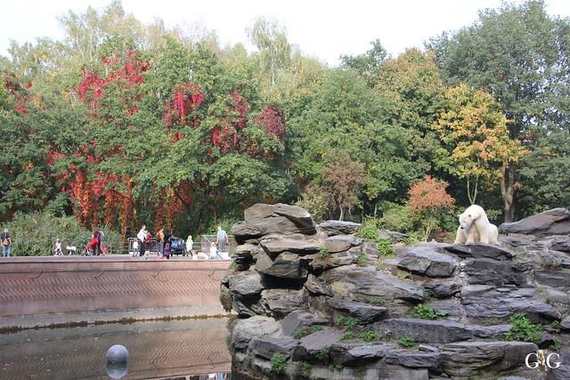 Sonntags-Besuch im Tierpark Friedrichsfelde 04.10.201594