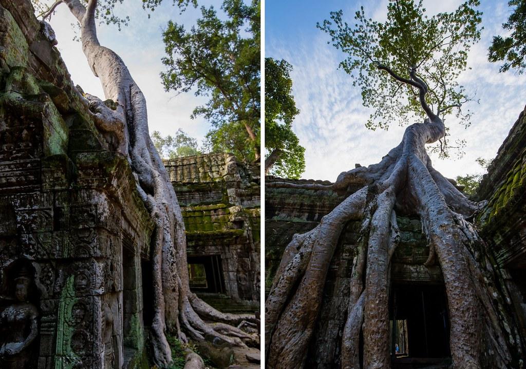 Angkor - Ta Prohm3-1