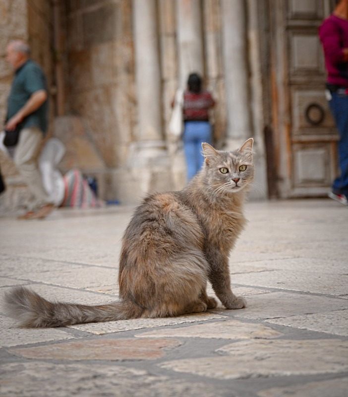 Cat in front of Holy Sepulchre Church