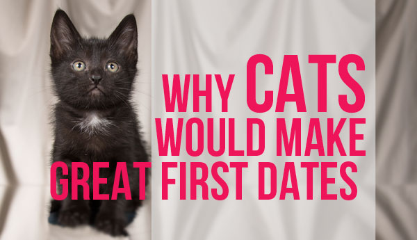 cats-great-first-dates