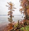 Reelfoot Lake 11 HDR Panorama B