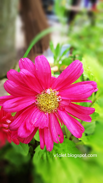 20150616_144029 aster2brw