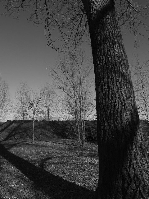 alberi silenziosi, Fujifilm XF1