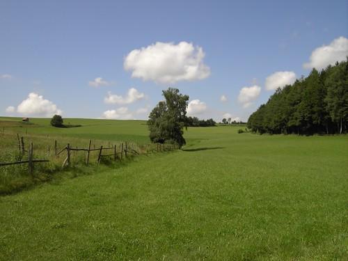 Paddock near Waltenhausen
