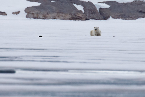 Polar Bear and a Seal
