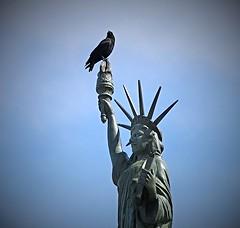 liberty perch