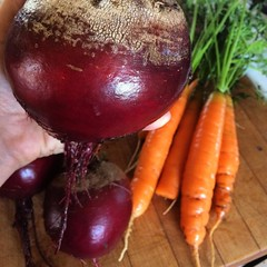 Our #garden is an incredible #gift #beets #carrots #somuch #landofplenty
