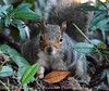 Squirrel in Bournemouth Gardens by Emily_Endean_Photography
