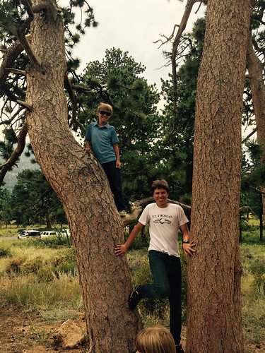 Tree Climbing in Colorado