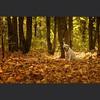 """И в заключение сегодняшней съёмки получилась вот эта карточка, которую я бы назвал в честь одноимённой группы: """"Secret Garden"""" #alivephoto #autumn #labrador #labradorretriever #лабрадор #лабрадорретривер by alivephoto.ru"""