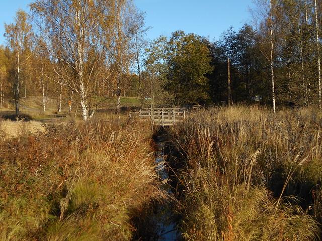 Niittynäkymiä syksyllä; monilajinen ojanvarsiniitty yöpakkasten tultua 12.10.2015 Espoo Leppävaara