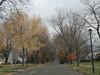 Suburbs in Autumn