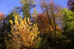 noch einmal Oktober - October once again