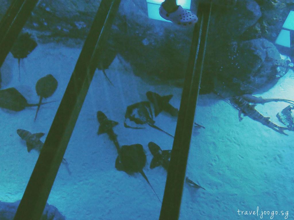 travel.joogo.sg - SEA Aquarium 10
