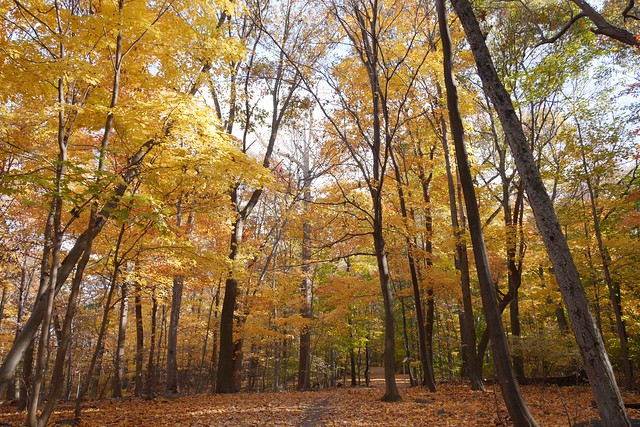 日, 2015-11-01 14:31 - Tillman Mountain State Park