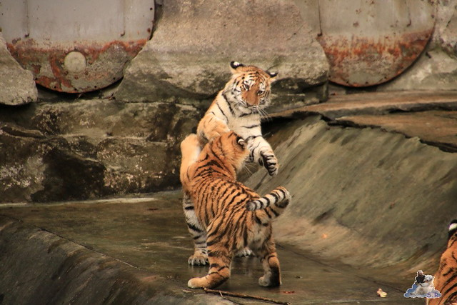 Tierpark Berlin 29.11.2015   121