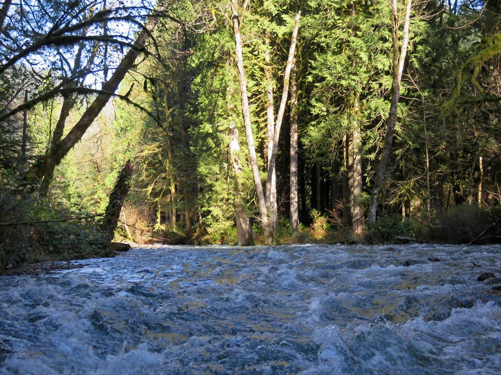 Creek near Cougar, WA