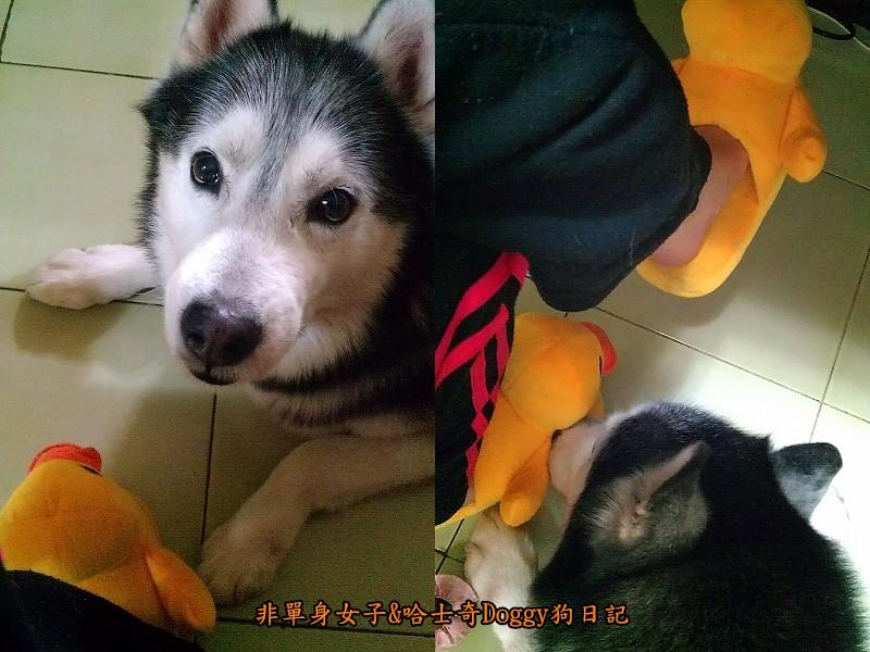 doggy黃色小鴨鞋08
