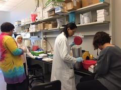 Dr. Debra Mayes lab