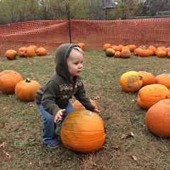 Picking out a pumpkin required a lot of heavy lifting.