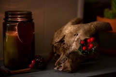 Christmas Skull | San Marcos, Texas · @karleymaureen let loose and decorated my house this past weekend. She incorporated her goat skull from Halloween into the mix. #igtexas #igsanmarcos #txst #smtx #christmasdecorations #goatskull #goat #rosemary #holly