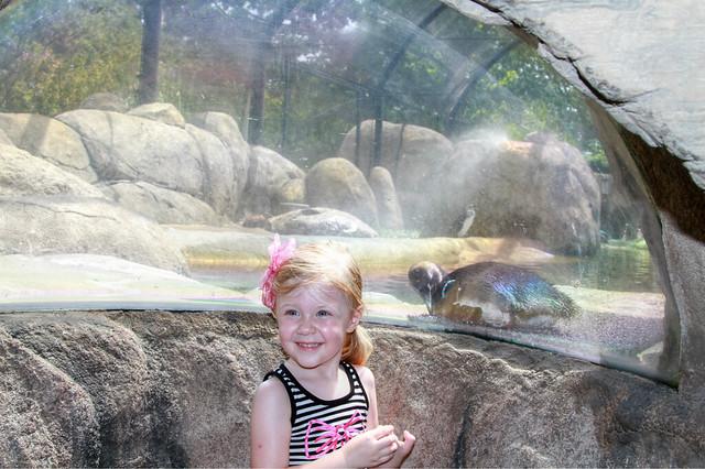 Little Rock Zoo: A Little Rockin