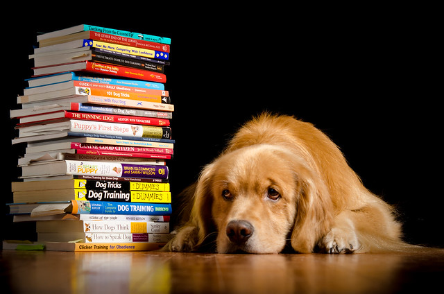 The Well Read Dog