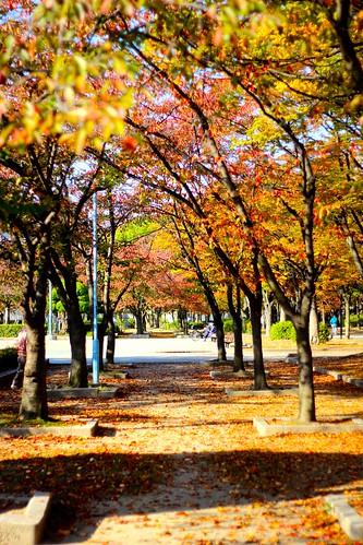 毛馬公園の紅葉(2015.11.4)