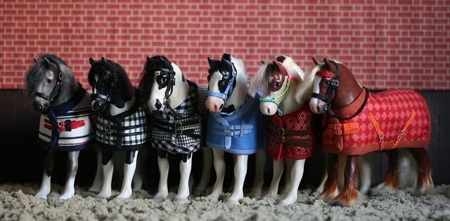Cob Stallions