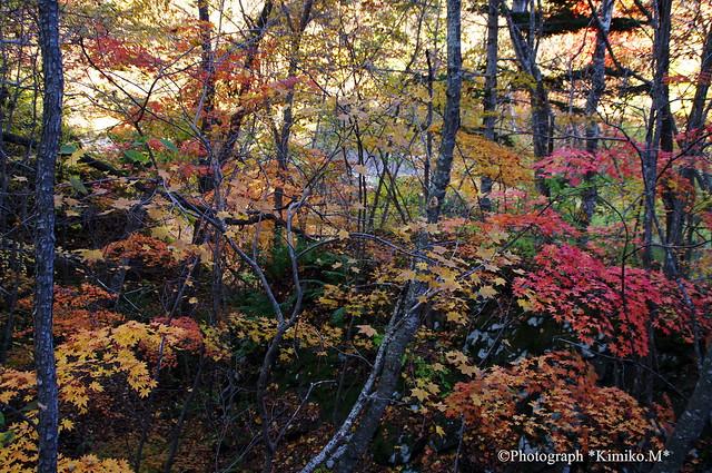 夕張 滝ノ上公園 ⑤