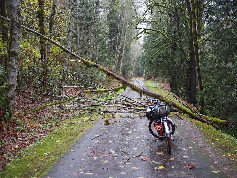 Preston–Snoqualmie Trail: Downed Tree: I had to stop to remove as much of these multiple downed trees as I could.  I was unable to do much about two of them, but whacked off branches until I was able to push my bike through a muddy, leafy ditch.