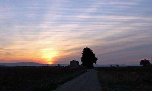 Coucher de soleil dans les vignes recadrée