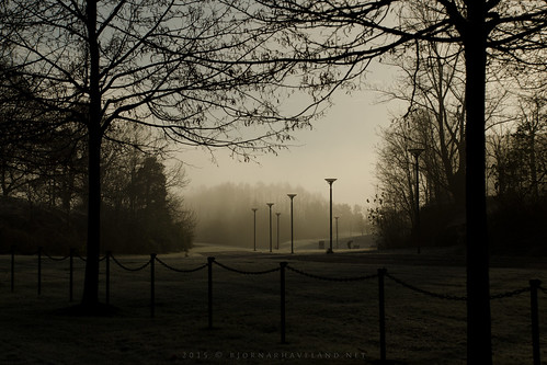 Misty Morning (iii)
