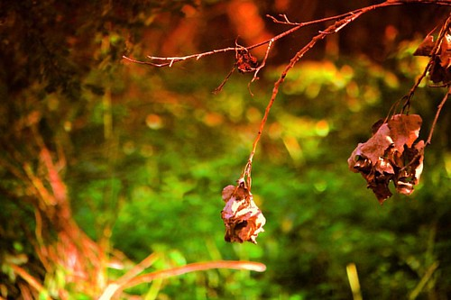 #germany #thüringen #turingia #nature #natural #natur #wald #baum #tree #blüte #bloom #blooms #verblüht #faded #autumn #herbst #wood #woodland #goodday