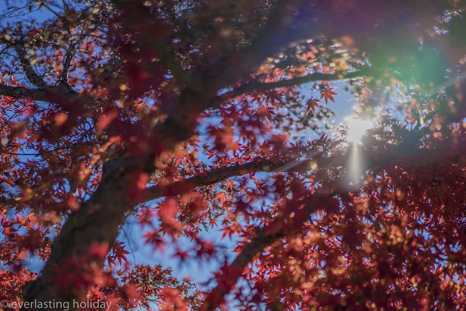 葉っぱ(紅)