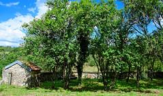 Le jardin de la petite croix - Photo of Cussey-les-Forges