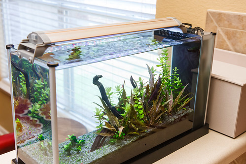 Spec V Aquarium with no lid