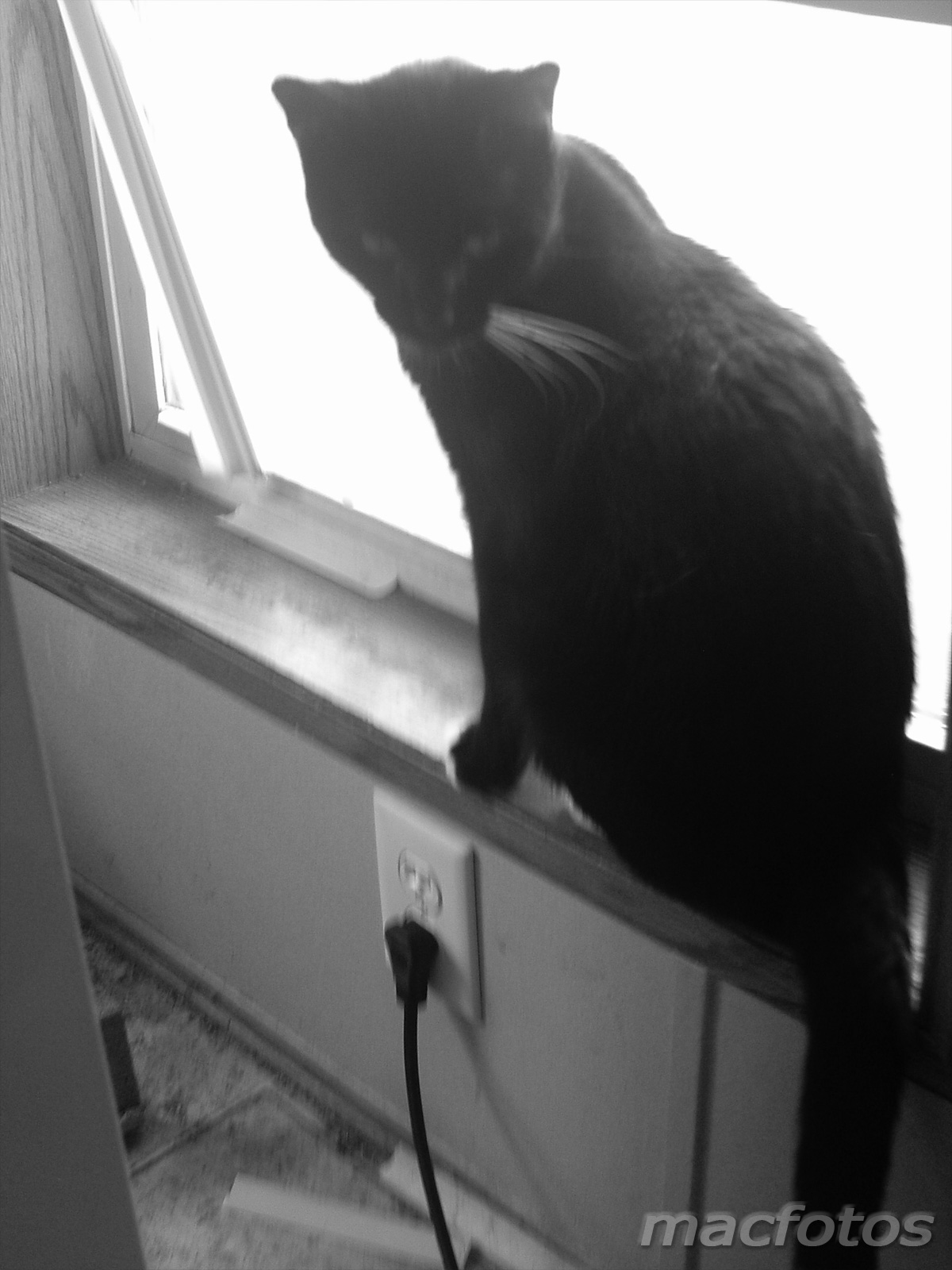Cat on sill
