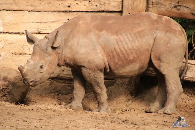 Zoo Berlin 18.09.2015   072
