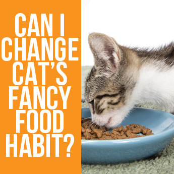 How to Change Cat Food