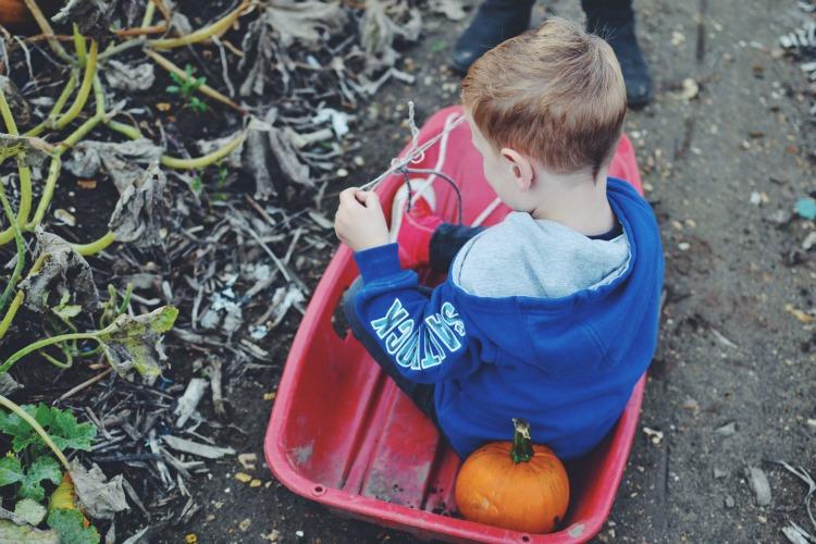 Pumpkin sledding