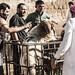 Verwiegung der Kurban-Schafe in der Provinz Idlib