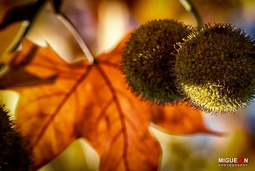 Un bokeh de otoño. Caravaca de la Cruz